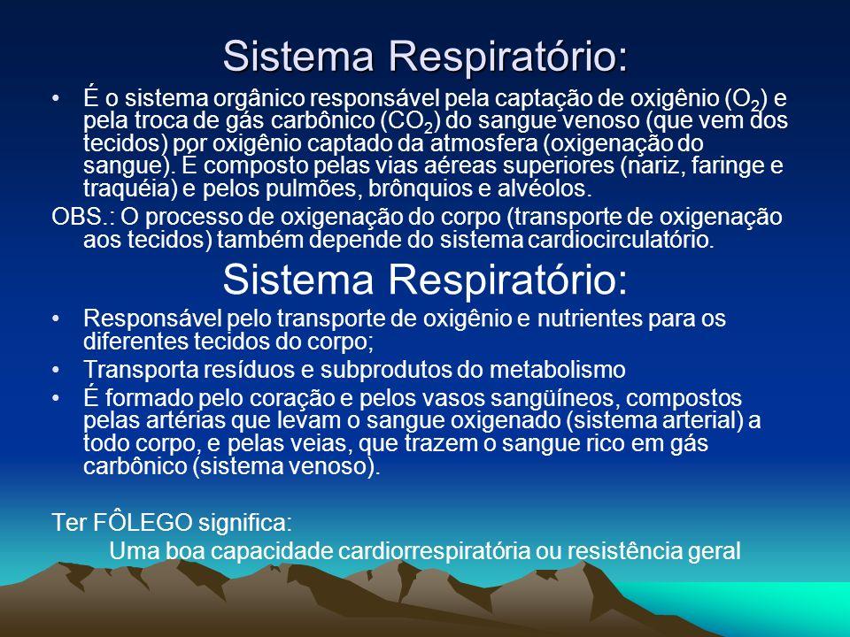 Sistema Respiratório: É o sistema orgânico responsável pela captação de oxigênio (O 2 ) e pela troca de gás carbônico (CO 2 ) do sangue venoso (que ve