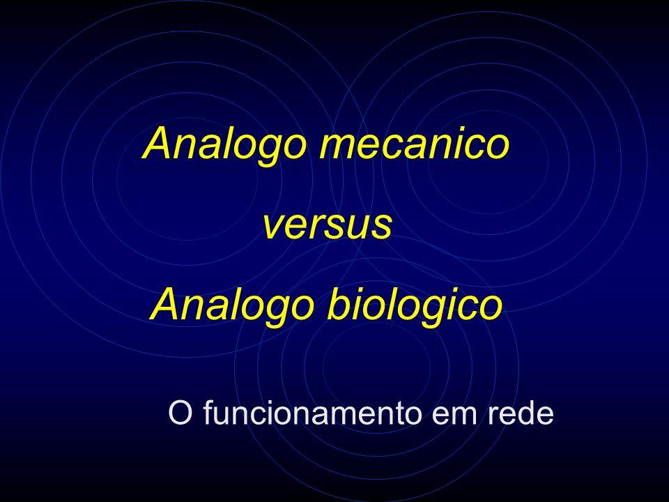 Analogo mecanico versus Analogo biologico O funcionamento em rede
