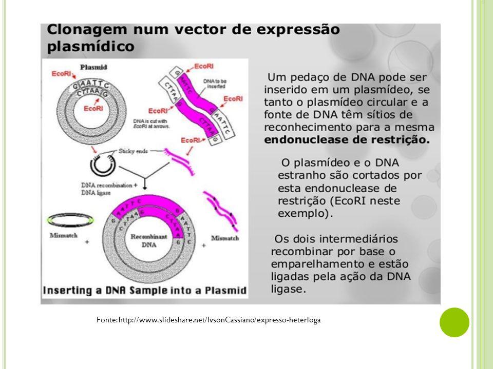Fonte: http://www.slideshare.net/IvsonCassiano/expresso-heterloga