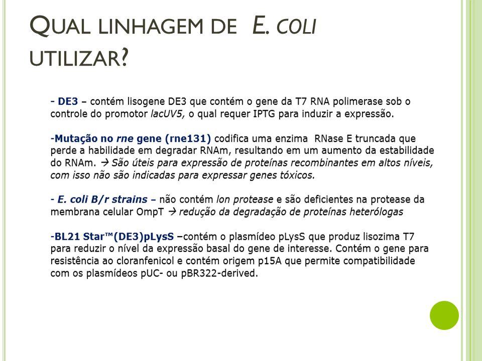 Q UAL LINHAGEM DE E. COLI UTILIZAR ?