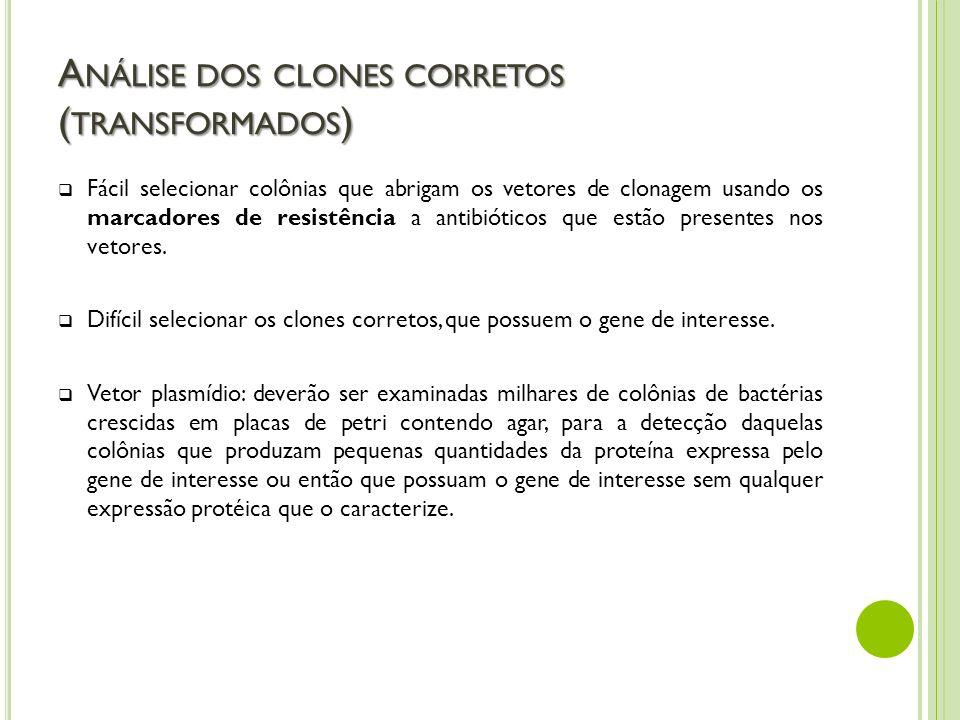 A NÁLISE DOS CLONES CORRETOS ( TRANSFORMADOS ) Fácil selecionar colônias que abrigam os vetores de clonagem usando os marcadores de resistência a anti