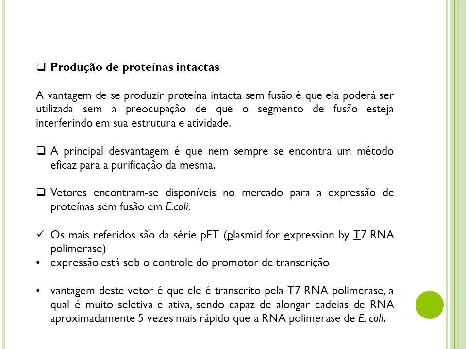 Produção de proteínas intactas A vantagem de se produzir proteína intacta sem fusão é que ela poderá ser utilizada sem a preocupação de que o segmento