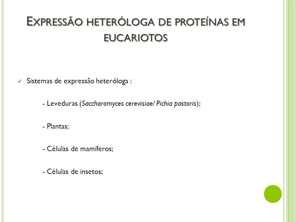 E XPRESSÃO HETERÓLOGA DE PROTEÍNAS EM EUCARIOTOS Sistemas de expressão heteróloga : - Leveduras (Saccharomyces cerevisiae/ Pichia pastoris); - Plantas