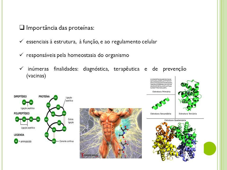 Importância das proteínas: essenciais à estrutura, à função, e ao regulamento celular responsáveis pela homeostasia do organismo inúmeras finalidades: