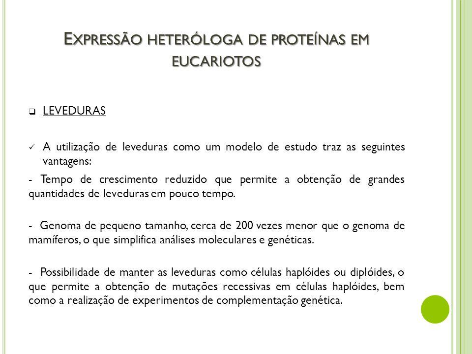 E XPRESSÃO HETERÓLOGA DE PROTEÍNAS EM EUCARIOTOS LEVEDURAS A utilização de leveduras como um modelo de estudo traz as seguintes vantagens: - Tempo de