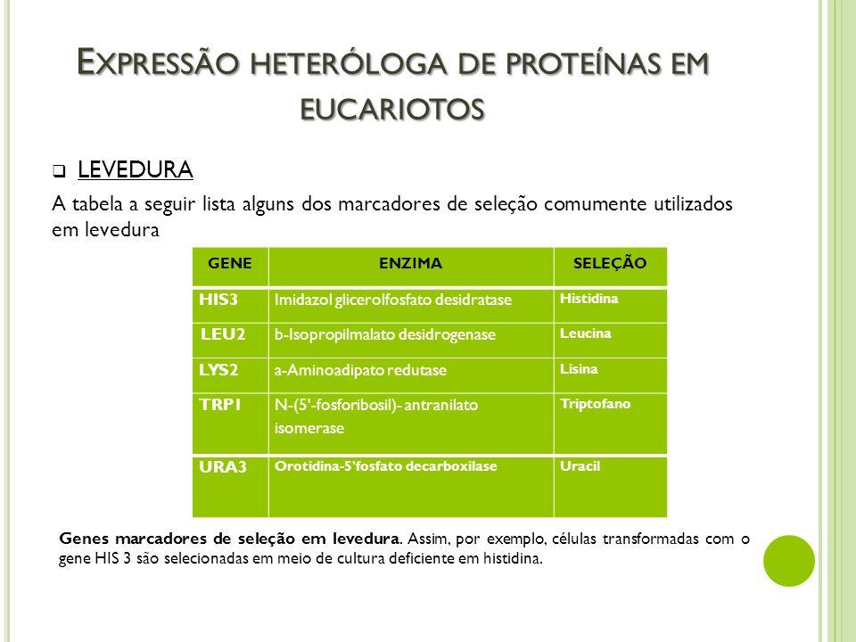 E XPRESSÃO HETERÓLOGA DE PROTEÍNAS EM EUCARIOTOS LEVEDURA A tabela a seguir lista alguns dos marcadores de seleção comumente utilizados em levedura GE