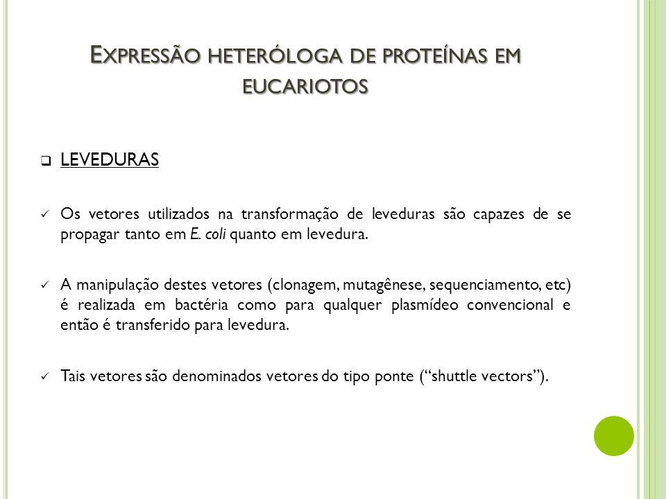 E XPRESSÃO HETERÓLOGA DE PROTEÍNAS EM EUCARIOTOS LEVEDURAS Os vetores utilizados na transformação de leveduras são capazes de se propagar tanto em E.