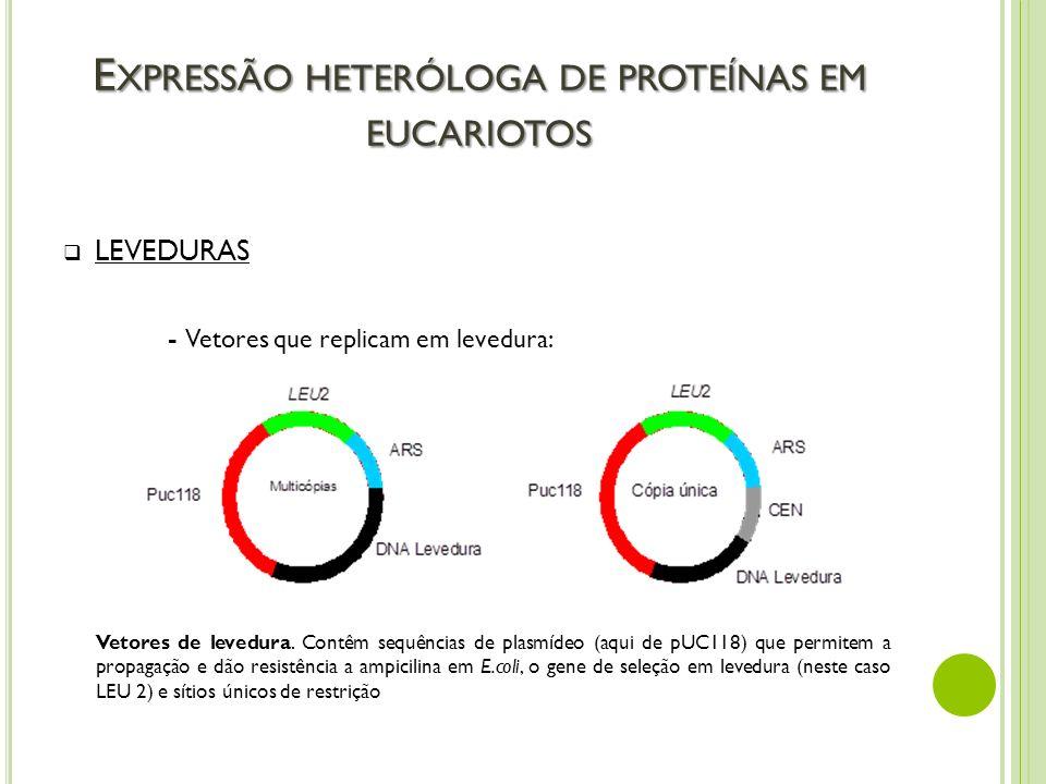 E XPRESSÃO HETERÓLOGA DE PROTEÍNAS EM EUCARIOTOS LEVEDURAS - Vetores que replicam em levedura: Vetores de levedura. Contêm sequências de plasmídeo (aq