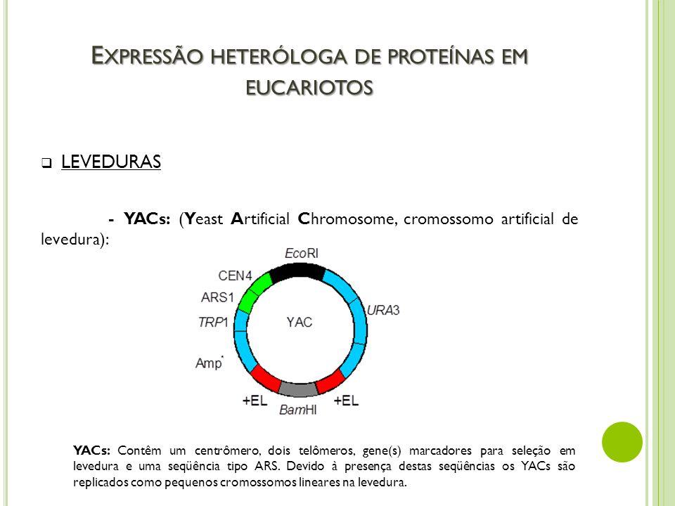 E XPRESSÃO HETERÓLOGA DE PROTEÍNAS EM EUCARIOTOS LEVEDURAS - YACs: (Yeast Artificial Chromosome, cromossomo artificial de levedura): YACs: Contêm um c