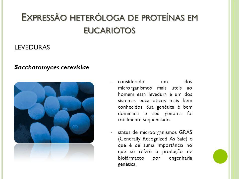 E XPRESSÃO HETERÓLOGA DE PROTEÍNAS EM EUCARIOTOS LEVEDURAS Saccharomyces cerevisiae -considerado um dos microrganismos mais úteis ao homem essa levedu