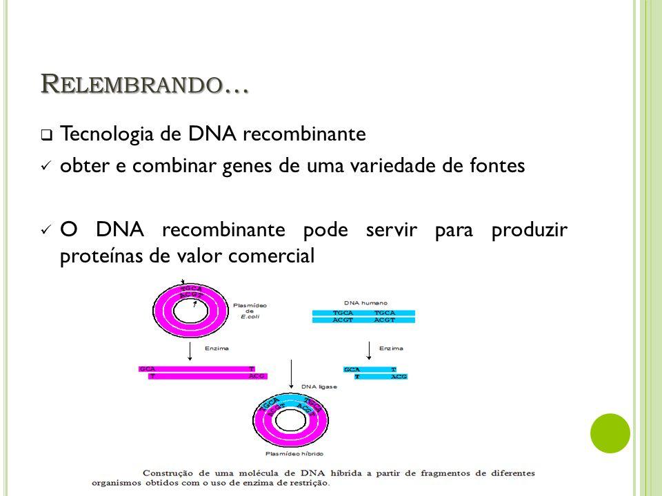 R ELEMBRANDO... Tecnologia de DNA recombinante obter e combinar genes de uma variedade de fontes O DNA recombinante pode servir para produzir proteína