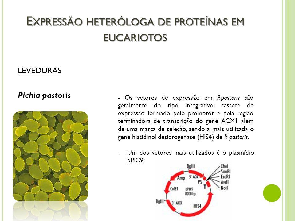 E XPRESSÃO HETERÓLOGA DE PROTEÍNAS EM EUCARIOTOS LEVEDURAS Pichia pastoris - Os vetores de expressão em P.pastoris são geralmente do tipo integrativo: