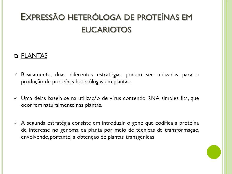 E XPRESSÃO HETERÓLOGA DE PROTEÍNAS EM EUCARIOTOS PLANTAS Basicamente, duas diferentes estratégias podem ser utilizadas para a produção de proteínas he