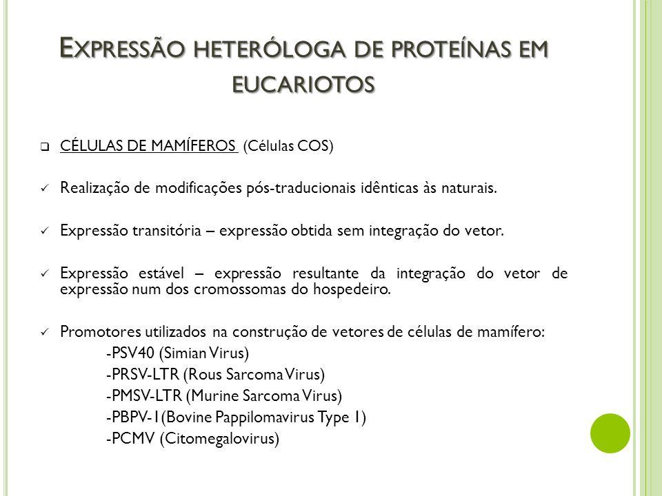 E XPRESSÃO HETERÓLOGA DE PROTEÍNAS EM EUCARIOTOS CÉLULAS DE MAMÍFEROS (Células COS) Realização de modificações pós-traducionais idênticas às naturais.