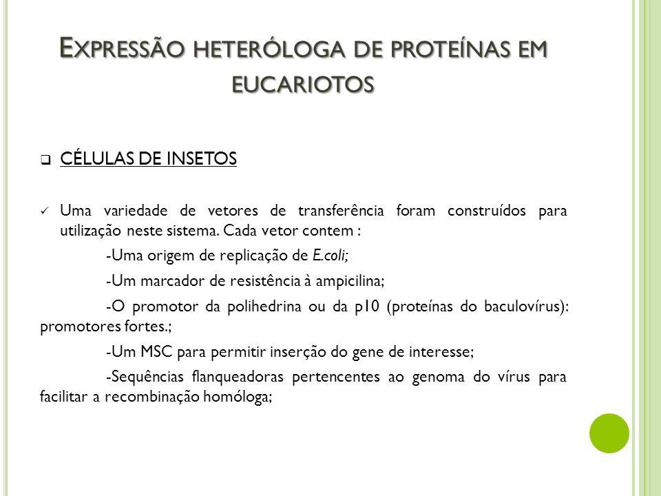 E XPRESSÃO HETERÓLOGA DE PROTEÍNAS EM EUCARIOTOS CÉLULAS DE INSETOS Uma variedade de vetores de transferência foram construídos para utilização neste