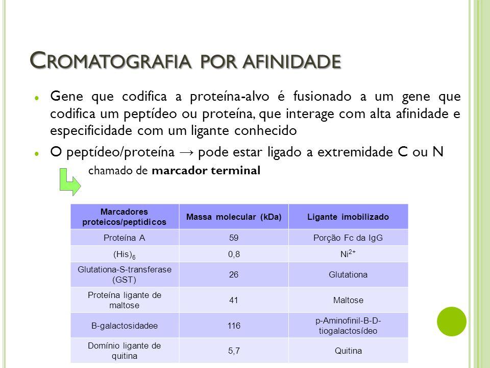 C ROMATOGRAFIA POR AFINIDADE Gene que codifica a proteína-alvo é fusionado a um gene que codifica um peptídeo ou proteína, que interage com alta afini
