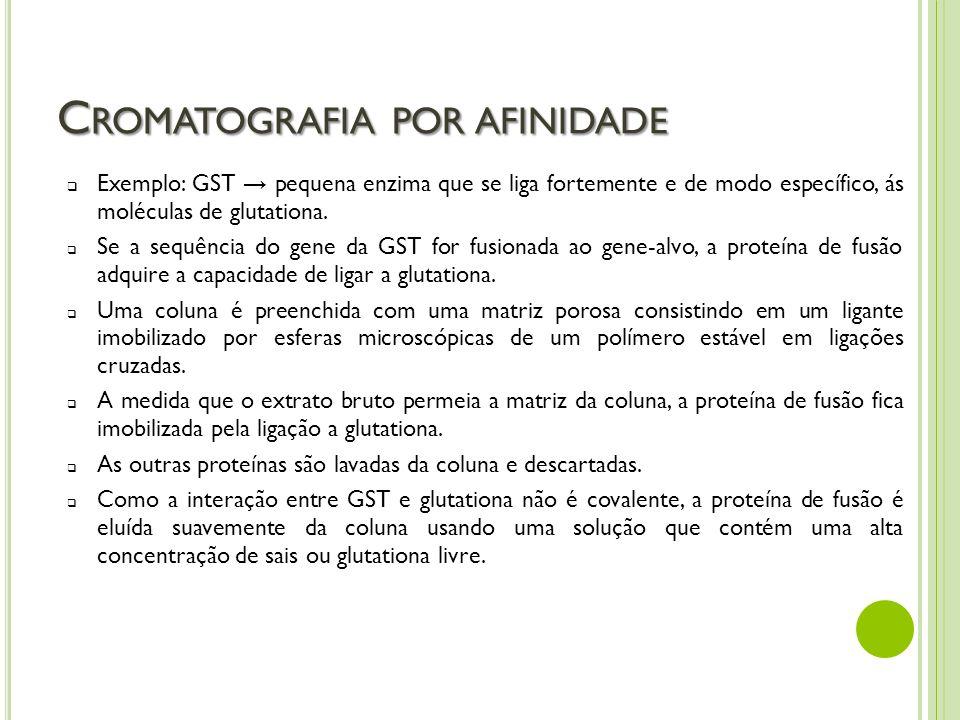 C ROMATOGRAFIA POR AFINIDADE Exemplo: GST pequena enzima que se liga fortemente e de modo específico, ás moléculas de glutationa. Se a sequência do ge