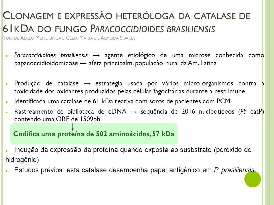 C LONAGEM E EXPRESSÃO HETERÓLOGA DA CATALASE DE 61 K D A DO FUNGO P ARACOCCIDIOIDES BRASILIENSIS Y URI DE A BREU M ENDONÇA E C ÉLIA M ARIA DE A LMEIDA
