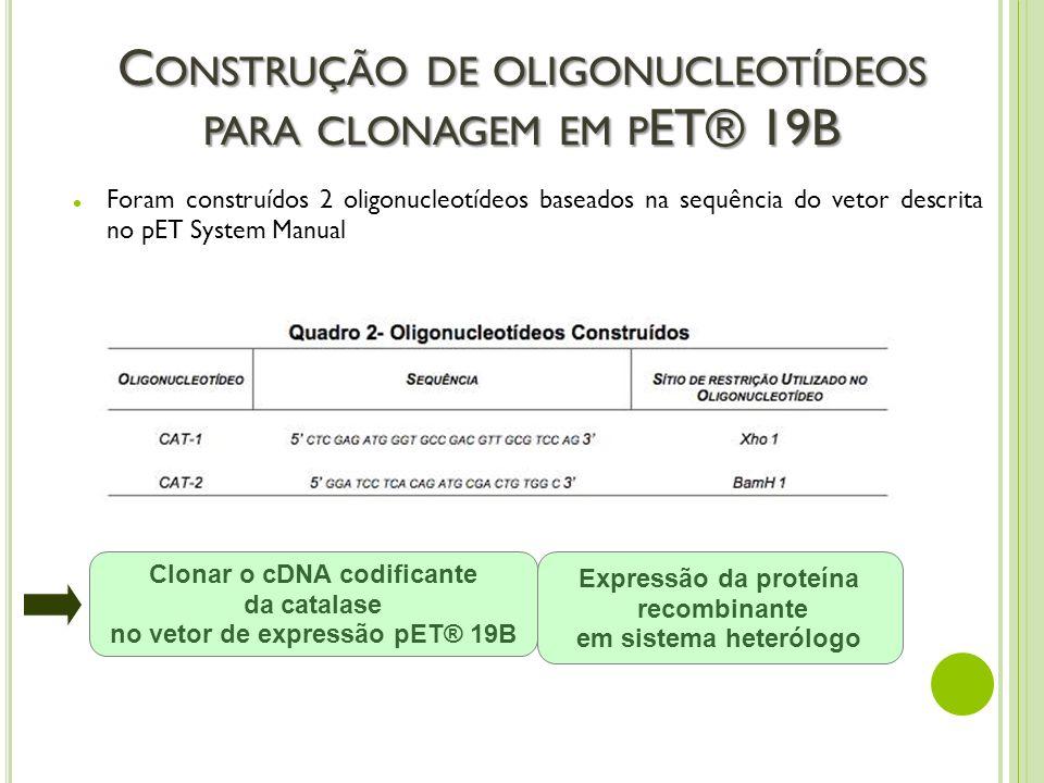 C ONSTRUÇÃO DE OLIGONUCLEOTÍDEOS PARA CLONAGEM EM P ET® 19B Foram construídos 2 oligonucleotídeos baseados na sequência do vetor descrita no pET Syste