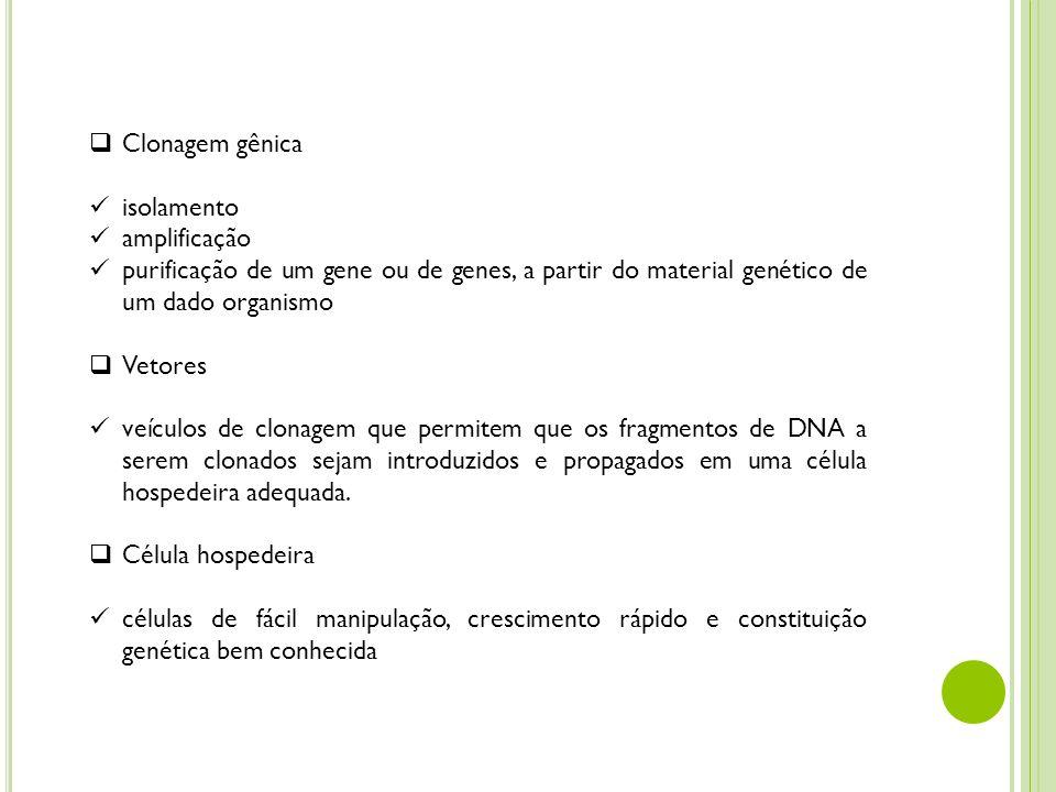 Clonagem gênica isolamento amplificação purificação de um gene ou de genes, a partir do material genético de um dado organismo Vetores veículos de clo