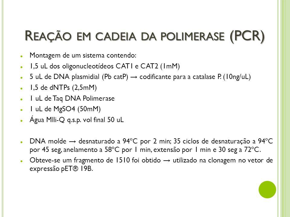 R EAÇÃO EM CADEIA DA POLIMERASE (PCR) Montagem de um sistema contendo: 1,5 uL dos oligonucleotídeos CAT1 e CAT2 (1mM) 5 uL de DNA plasmidial (Pb catP)