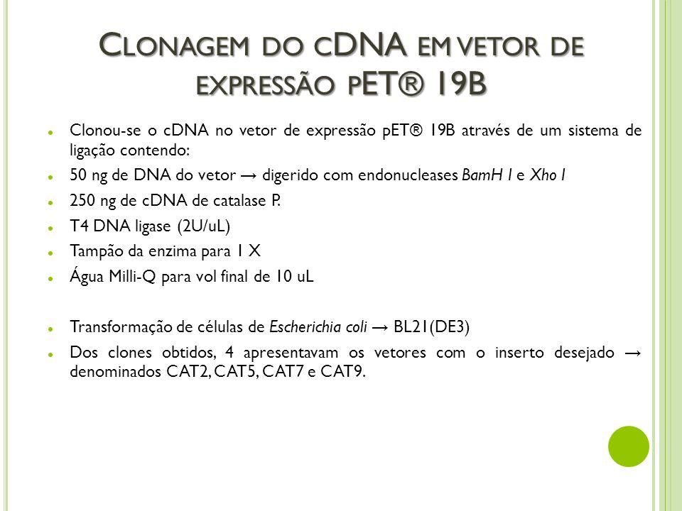 C LONAGEM DO C DNA EM VETOR DE EXPRESSÃO P ET® 19B Clonou-se o cDNA no vetor de expressão pET® 19B através de um sistema de ligação contendo: 50 ng de
