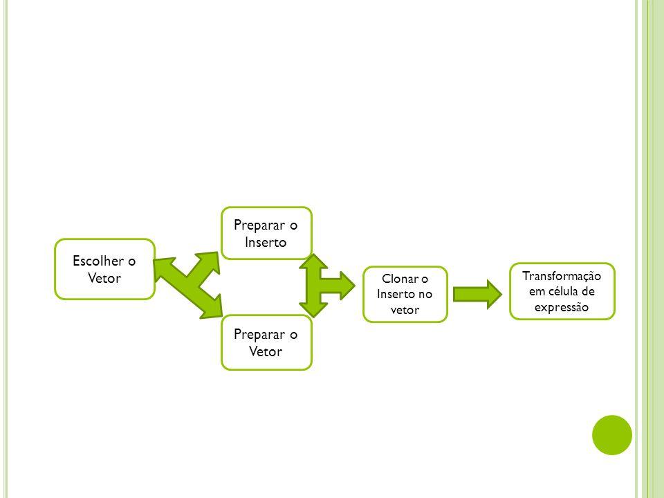 Escolher o Vetor Preparar o Inserto Preparar o Vetor Clonar o Inserto no vetor Transformação em célula de expressão