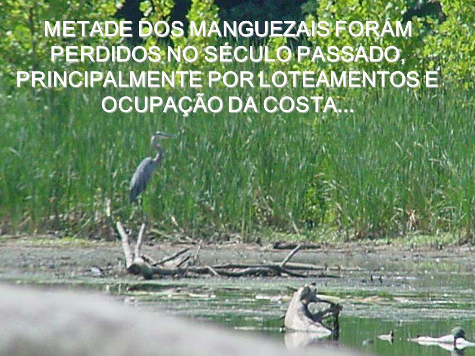 SP - Capital METADE DOS MANGUEZAIS FORAM PERDIDOS NO SÉCULO PASSADO, PRINCIPALMENTE POR LOTEAMENTOS E OCUPAÇÃO DA COSTA...