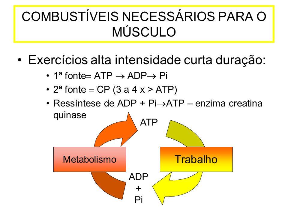 Exercícios alta intensidade curta duração: 1ª fonte ATP ADP Pi 2ª fonte CP (3 a 4 x > ATP) Ressíntese de ADP + Pi ATP – enzima creatina quinase COMBUS