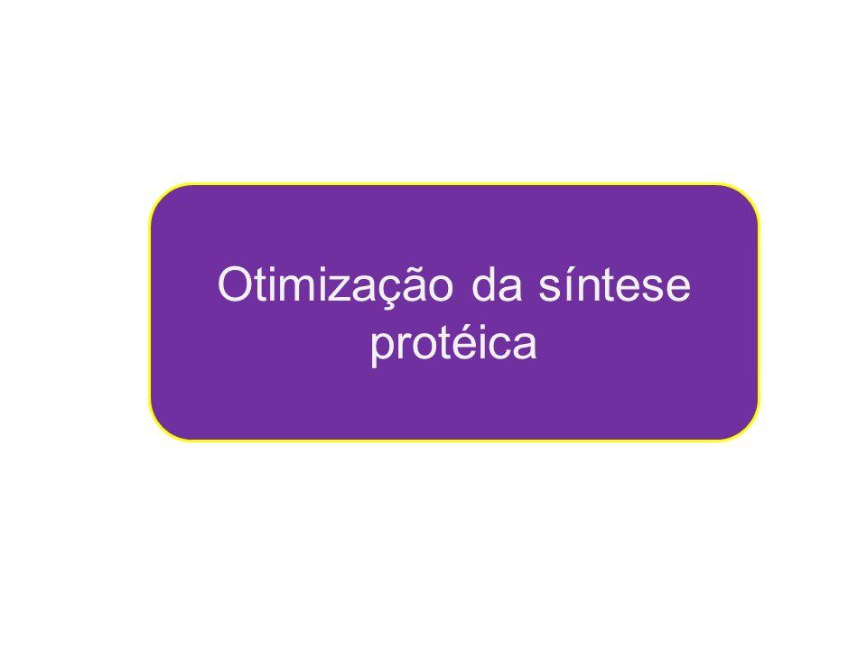 Otimização da síntese protéica