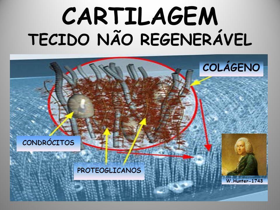 CARTILAGEM TECIDO NÃO REGENERÁVEL COLÁGENO CONDRÓCITOS PROTEOGLICANOS W.Hunter-1743
