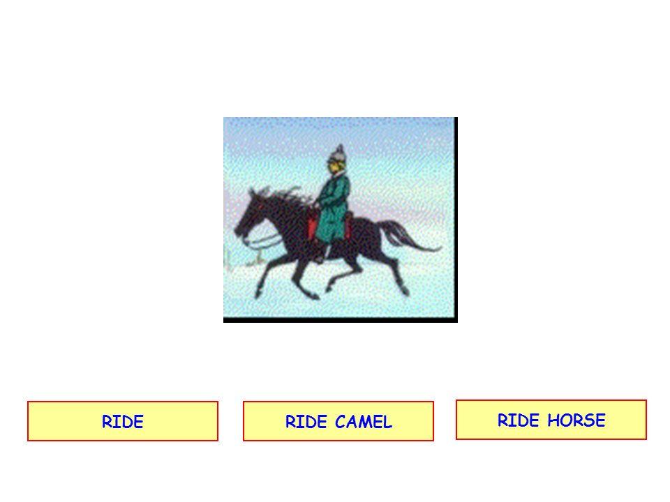 RIDERIDE CAMEL RIDE HORSE