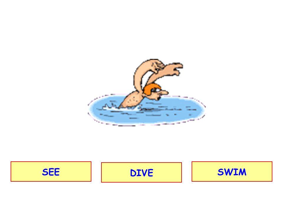 SEE DIVE SWIM