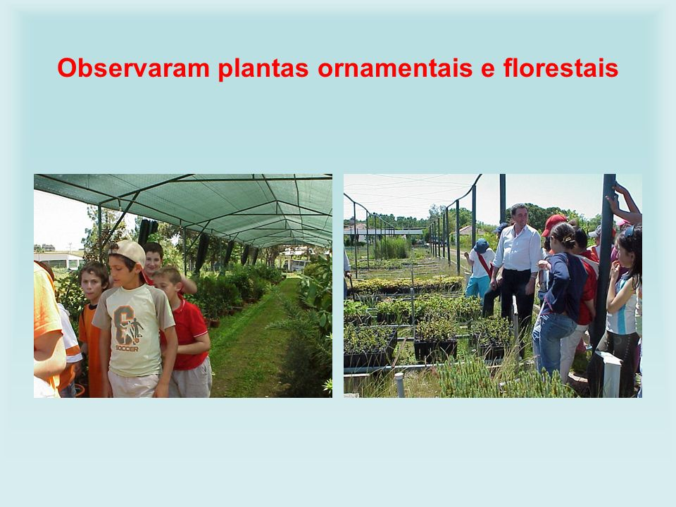 Observaram plantas ornamentais e florestais
