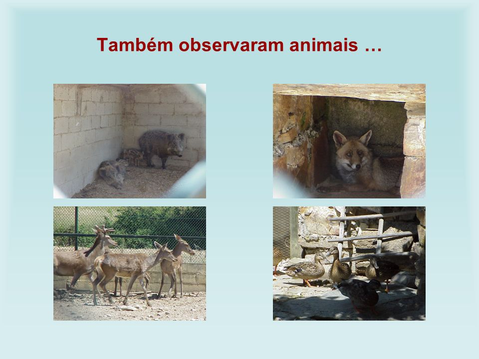 Também observaram animais …