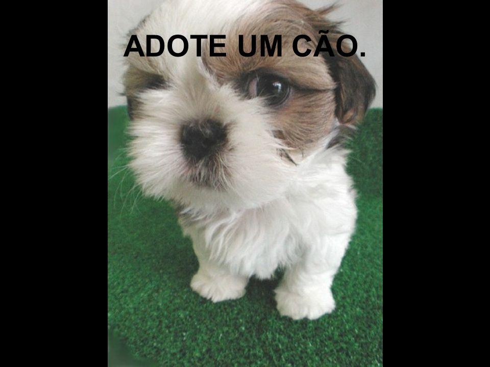 ADOTE UM CÃO.