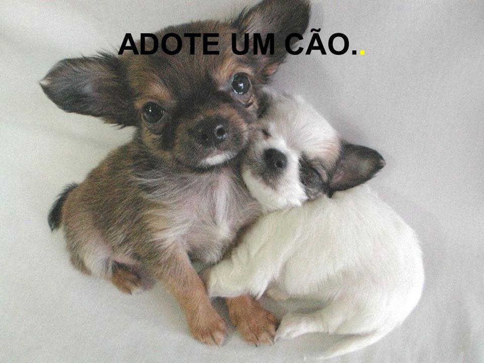 ADOTE UM CÃO..