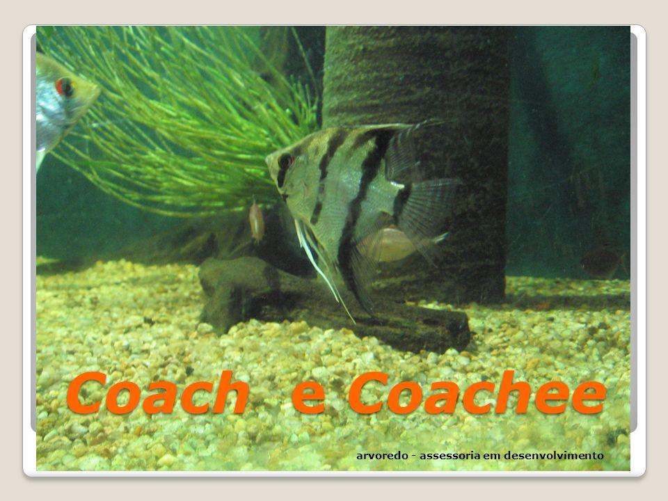Coach e Coachee arvoredo - assessoria em desenvolvimento