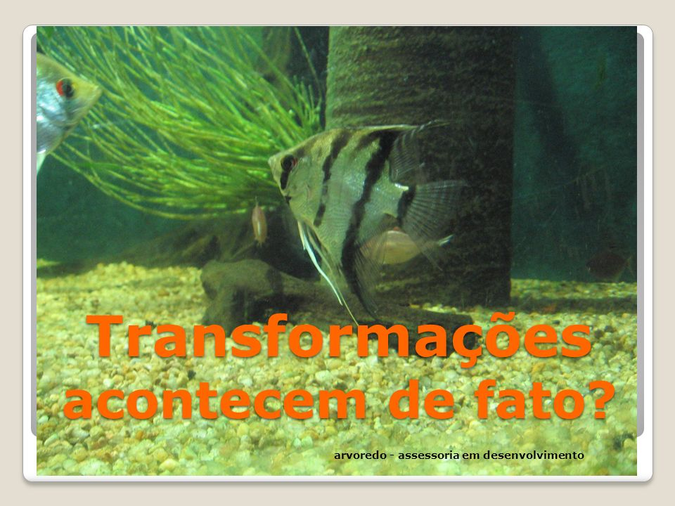 Transformações acontecem de fato? arvoredo - assessoria em desenvolvimento