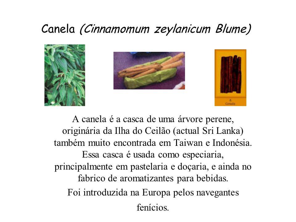 Canela (Cinnamomum zeylanicum Blume) A canela é a casca de uma árvore perene, originária da Ilha do Ceilão (actual Sri Lanka) também muito encontrada em Taiwan e Indonésia.