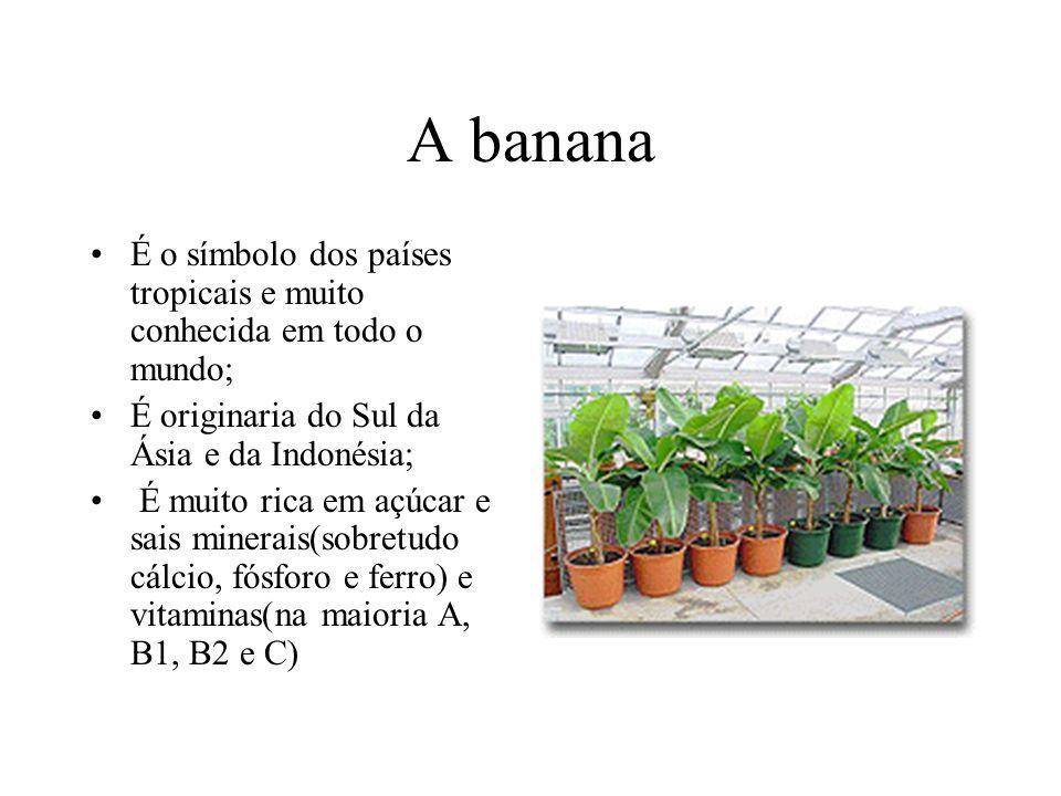 A banana É o símbolo dos países tropicais e muito conhecida em todo o mundo; É originaria do Sul da Ásia e da Indonésia; É muito rica em açúcar e sais minerais(sobretudo cálcio, fósforo e ferro) e vitaminas(na maioria A, B1, B2 e C)