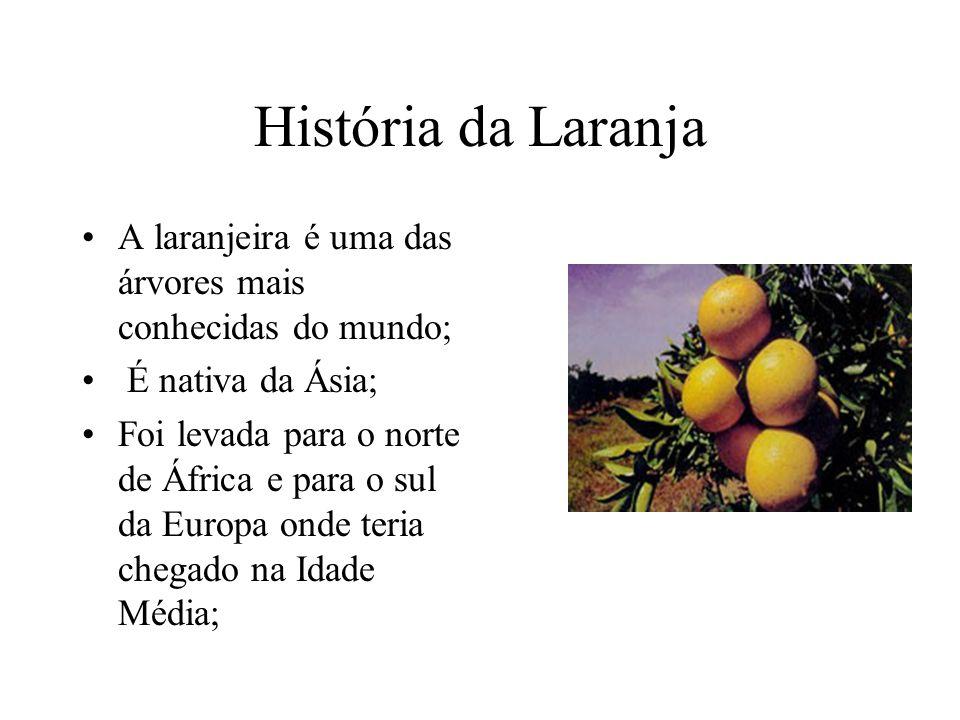 História da Laranja A laranjeira é uma das árvores mais conhecidas do mundo; É nativa da Ásia; Foi levada para o norte de África e para o sul da Europa onde teria chegado na Idade Média;