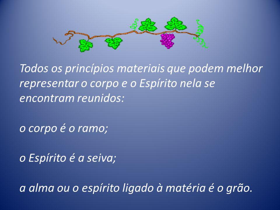 Todos os princípios materiais que podem melhor representar o corpo e o Espírito nela se encontram reunidos: o corpo é o ramo; o Espírito é a seiva; a alma ou o espírito ligado à matéria é o grão.