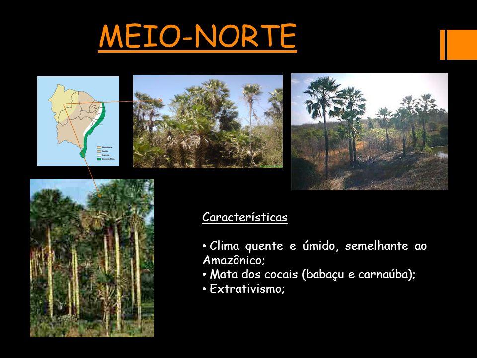 MEIO-NORTECaracterísticas Clima quente e úmido, semelhante ao Amazônico; Clima quente e úmido, semelhante ao Amazônico; Mata dos cocais (babaçu e carn
