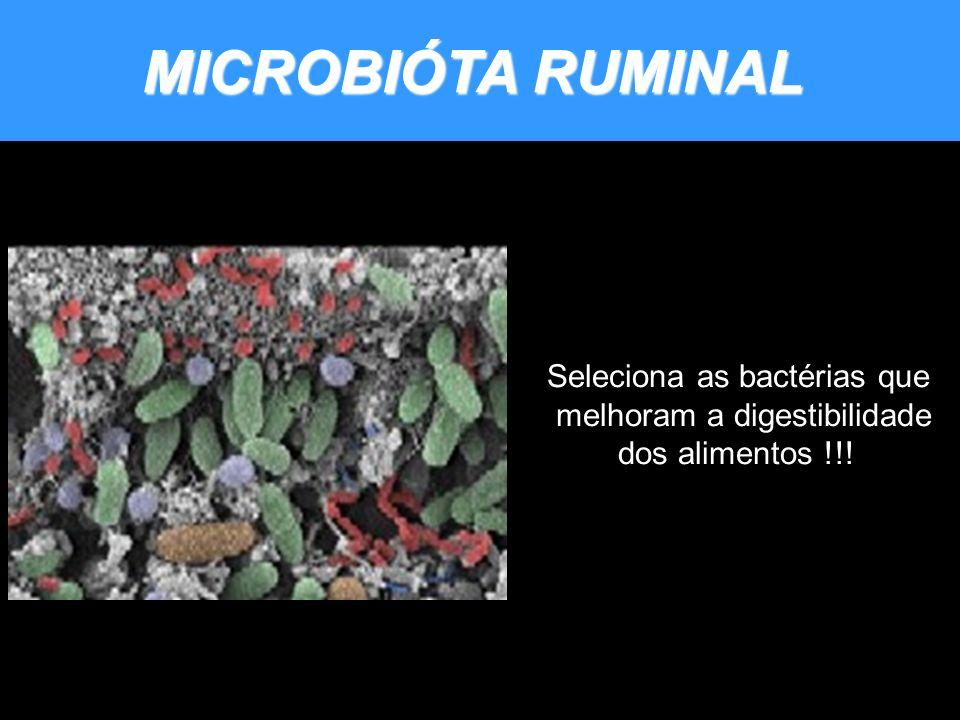 MICROBIÓTA RUMINAL Seleciona as bactérias que melhoram a digestibilidade dos alimentos !!!