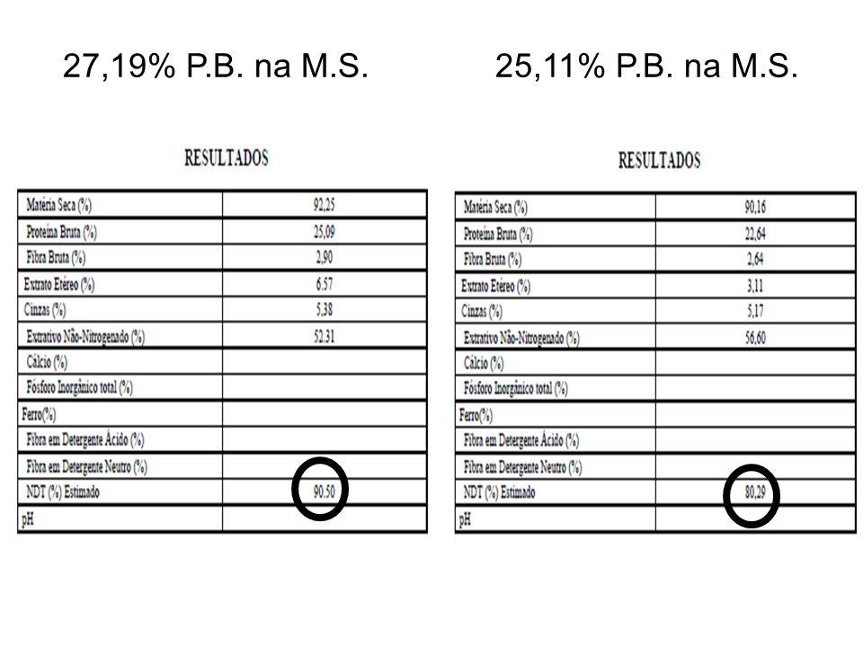 27,19% P.B. na M.S.25,11% P.B. na M.S.