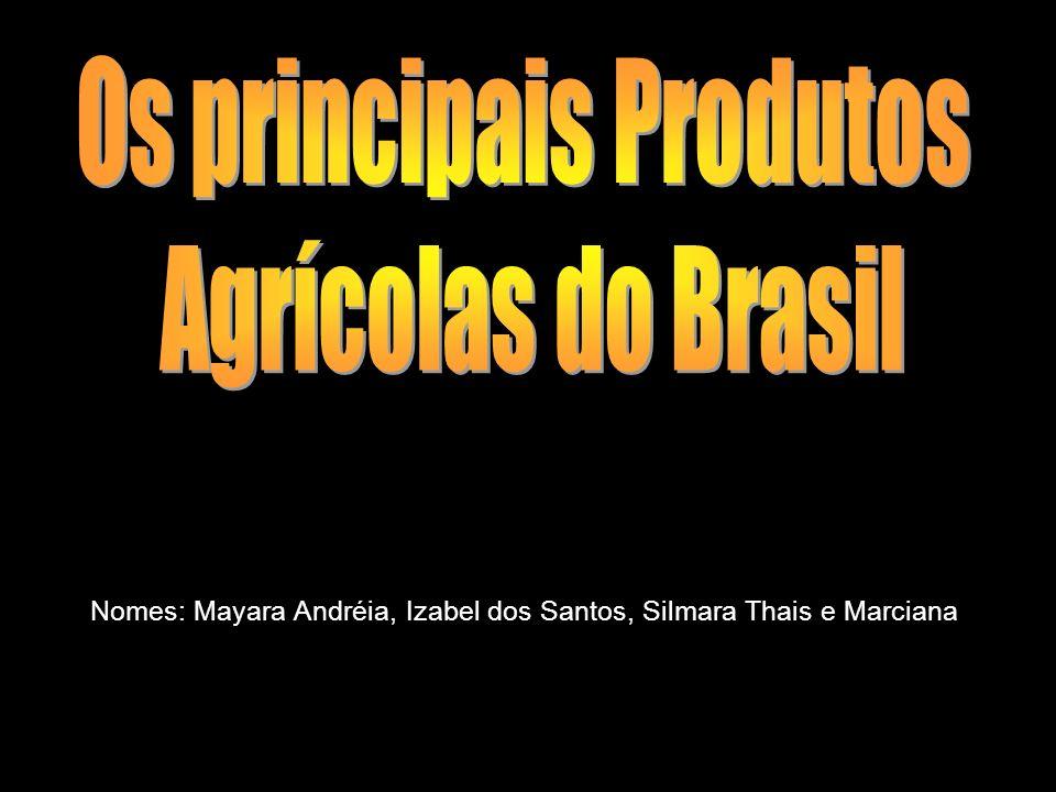 Nomes: Mayara Andréia, Izabel dos Santos, Silmara Thais e Marciana
