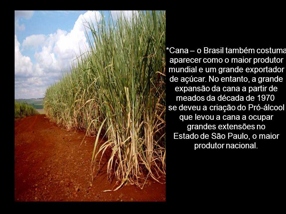 *Cana – o Brasil também costuma aparecer como o maior produtor mundial e um grande exportador de açúcar.