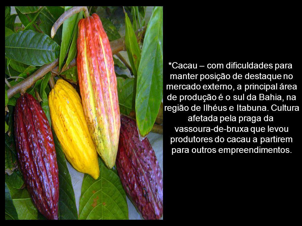 *Cacau – com dificuldades para manter posição de destaque no mercado externo, a principal área de produção é o sul da Bahia, na região de Ilhéus e Itabuna.