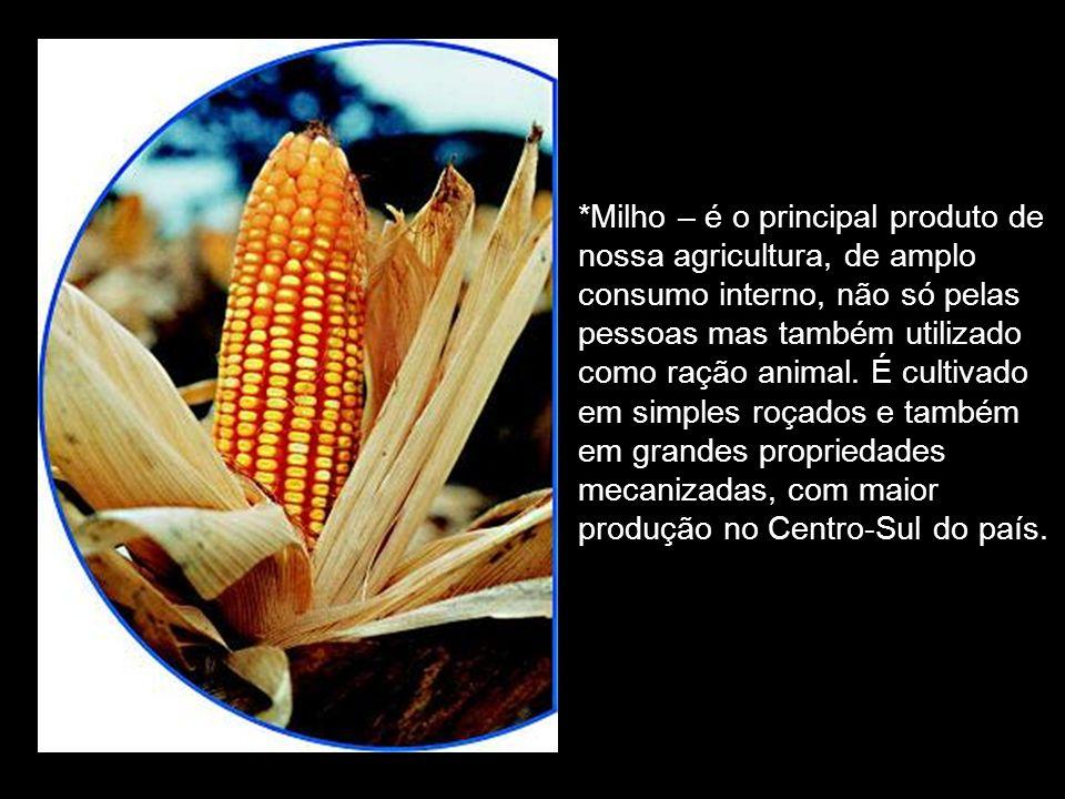 *Milho – é o principal produto de nossa agricultura, de amplo consumo interno, não só pelas pessoas mas também utilizado como ração animal.